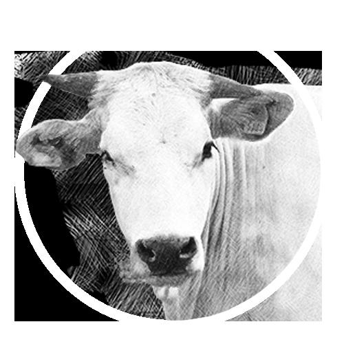 vitello-block